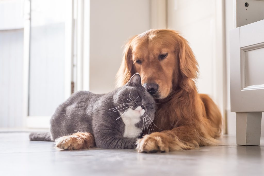 cat and dog snuggle together